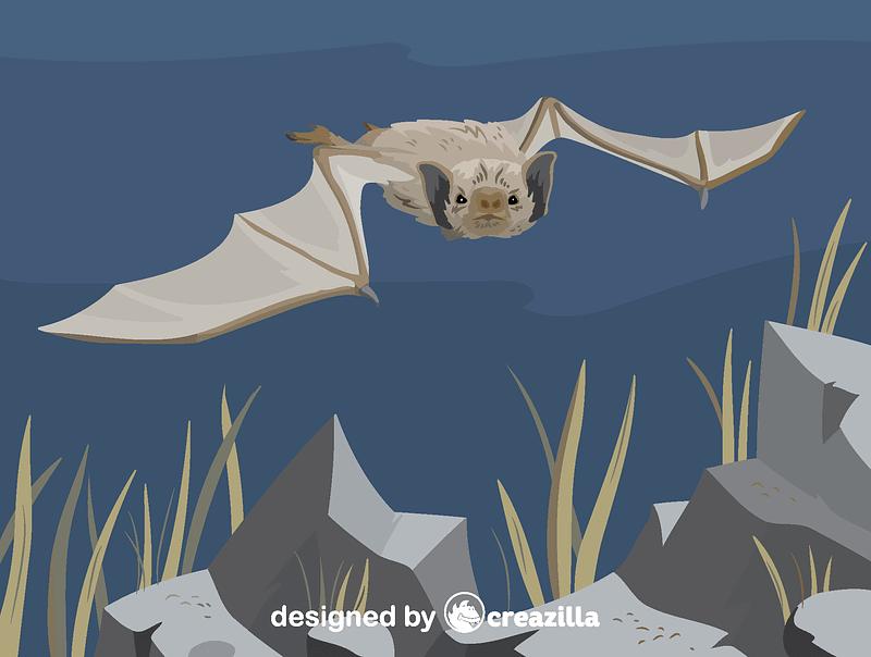 White-winged vampire bat vector