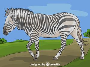 Hartman's Mountain Zebra vector