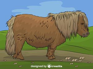 Shetland Pony vector