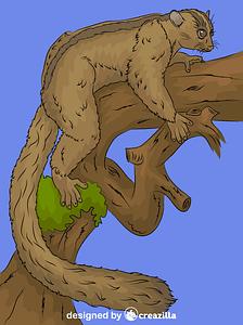 Masoala Fork-crowned Lemur vector