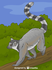Ring-tailed Lemur vector