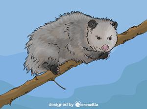 Virginia Opossum vector