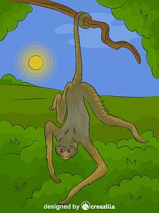 Spider Monkey vector