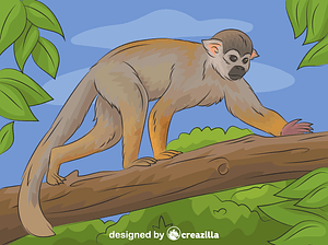 Squirrel Monkey vector