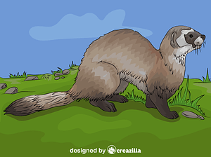 Black-footed Ferret vector