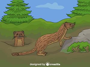 Long-tailed Weasel vector