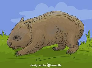 Common Wombat vector