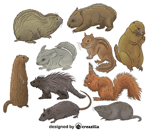 Set of Rodents vector
