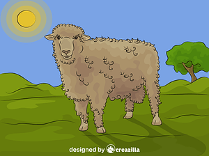 Corriedale Sheep vector