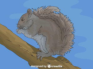 Eastern Grey Squirrel vector