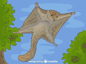 Flying Squirrel vector