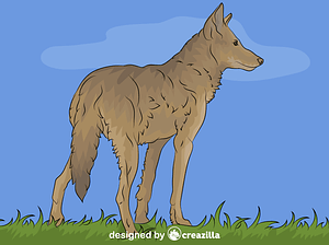 Red Wolf vector