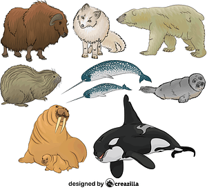 Set of Arctic Animals vector