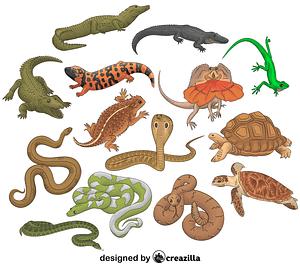 Set of Reptiles vector