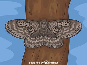 Brahmeid Moth vector