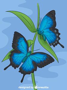 Ulysses Butterflies vector