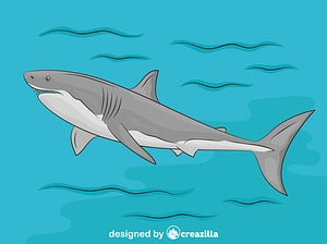 Great White Shark in the Water vector