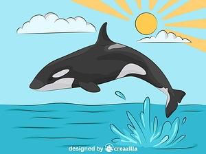 Killer Whale jumping out of water vector