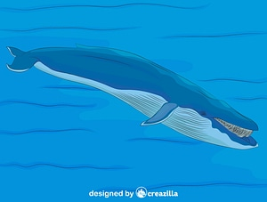 Blue Whale in the Water vector