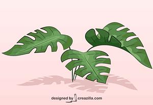 Monstera Leaves vector