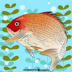 Red Seabream vector