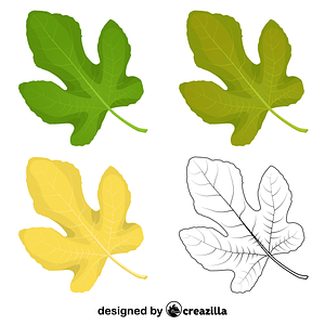 Common fig leaves vector