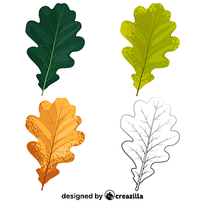 English oak leaves vector