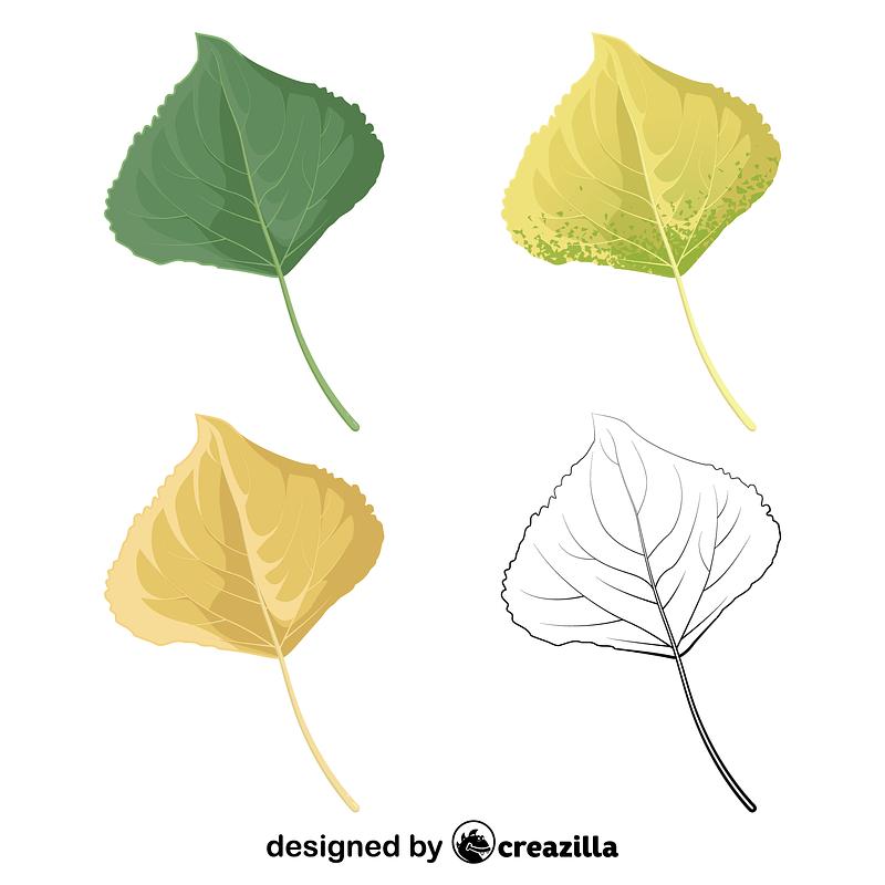 Lombardy poplar leaf vector