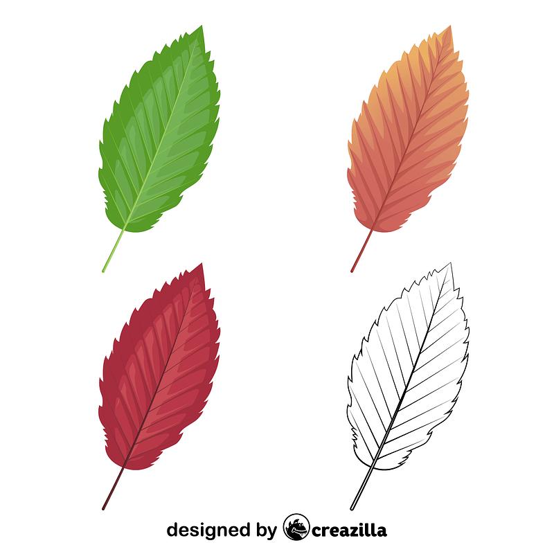 Red alder leaves vector