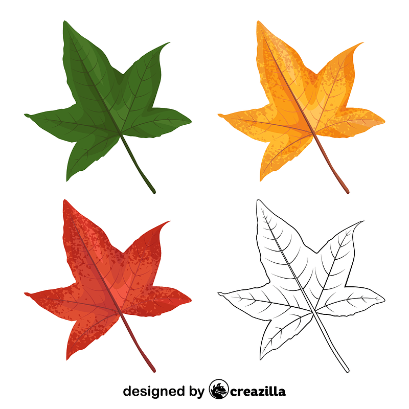 Sweetgum leaves vector