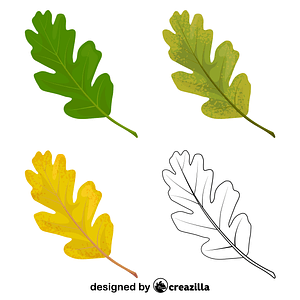 Valley oak leaves vector