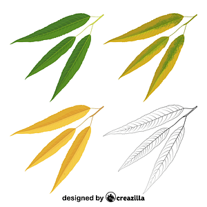 White willow leaves vector