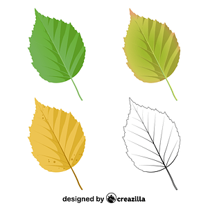 Paper birch leaves vector