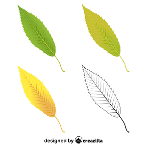 Sawtooth oak leaves vector