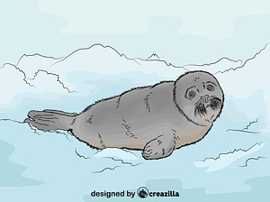Harp Seal vector