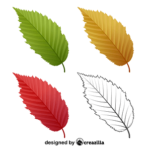 American hornbeam leaves vector