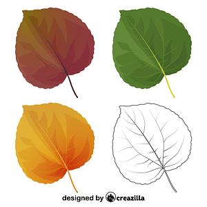 Katsura tree leaves vector