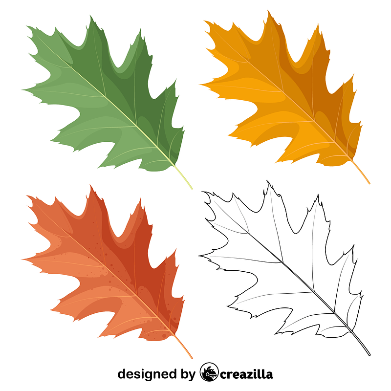 Northern red oak leaves vector
