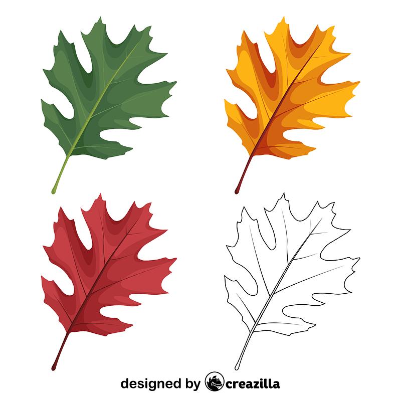 Shumard oak leaves vector