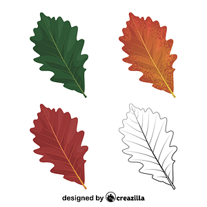 Swamp white oak leaves vector