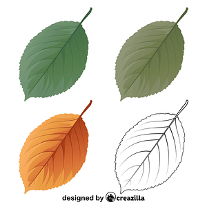 Wild cherry tree leaves vector