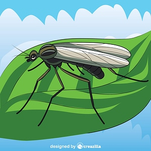 Window Gnat vector