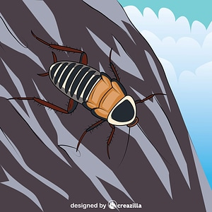 Zebra Cockroach vector