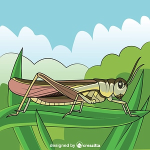 Rocky Mountain Locust vector