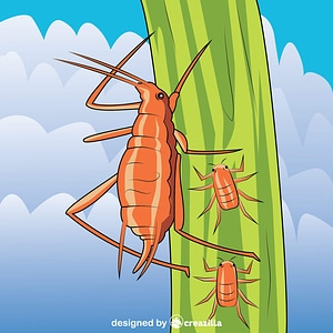 Pea Aphid vector