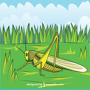Green Cricket Insect vector