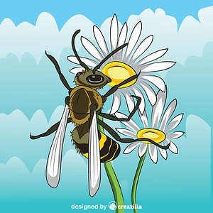 Hornet on the Michaelmas Daisy Flower vector