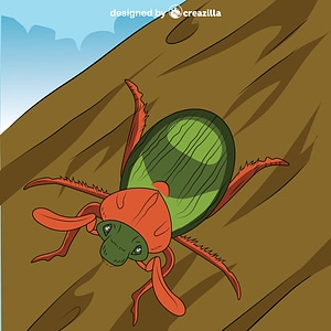 June bug vector