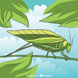 Katydid Leaf Bug vector