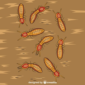 Formosan Subterranean Termites vector